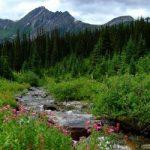 Swift Creek